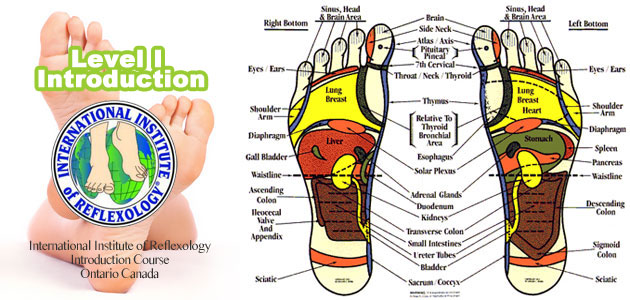 Reflexology Training Course I